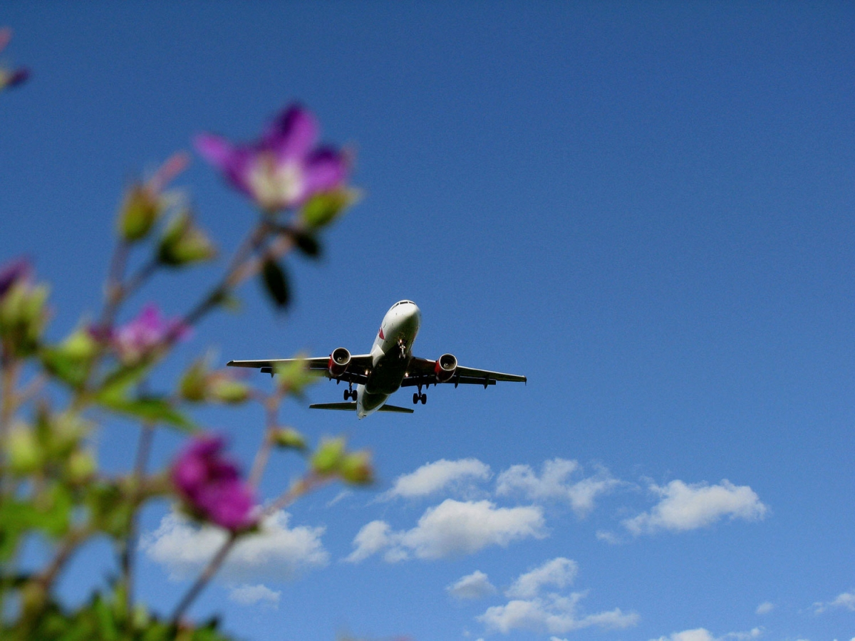 Как в самолете перевозить цветы
