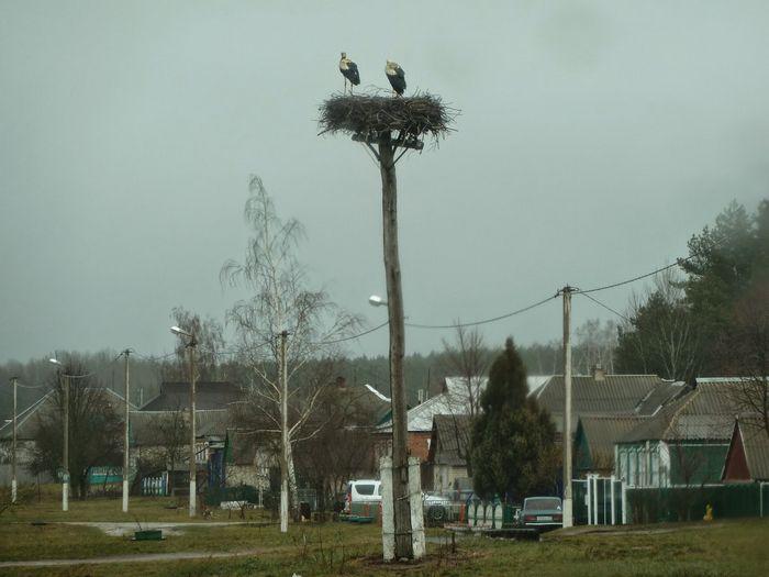 Счастливая судьба «птицы марабу»