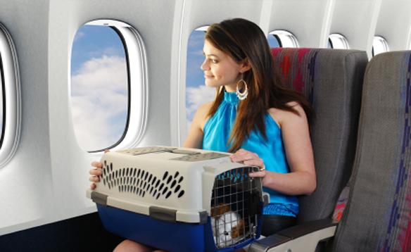 Собака в самолёте : правила перевозки собак в самолете